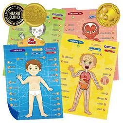 i poster my body interactive educational human