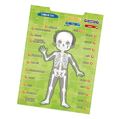 BEST LEARNING i-Poster My Body Educational Human